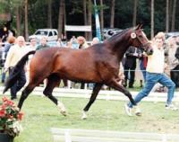 Laura v. Lauries Crusador xx aus Anka Siegerin Louis-Wiegels-Schau 1999 in Sandborstel